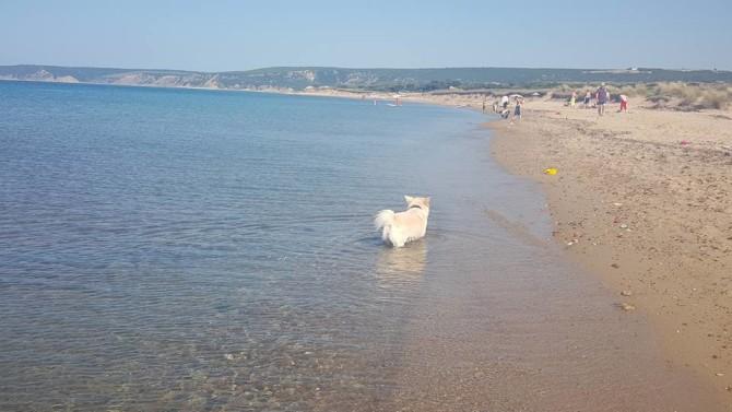 Siz hiç Saroz denizinde yüzdünüz mü?